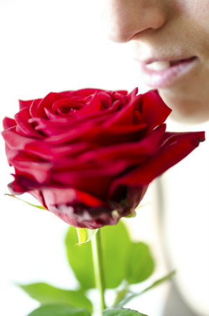 A Rose Is A Rose Is A Rose Unless You Can T Smell It